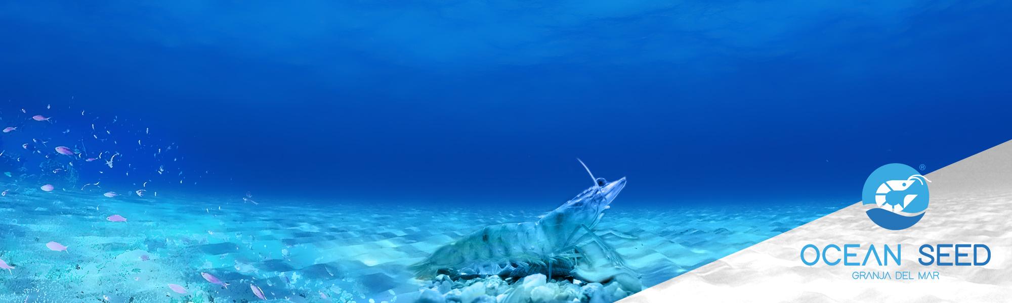 banner_ocean